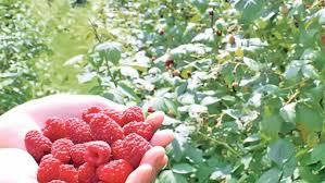 Photo of Uspešna godina za uzgajivače voća