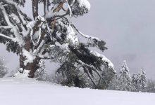 Photo of Sveti bor na Kamenoj Gori iako polomljen obilaze turisti i umetnici