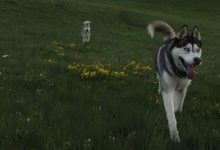 "Photo of Zlatibor ""Pet friendly"" destinacija"