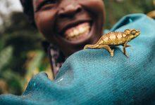 Photo of Svetski dan divljih vrsta: Ta divna divlja stvorenja