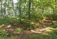 Photo of Vlasnici privatnih šuma traže pravilnije i namensko trošenje sredstava Budžetskog fonda za šume na lokalnom nivou